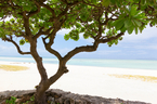 女子旅には「島」がオススメ!この夏行きたい日本が味わえる島3選