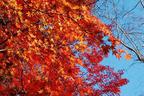 満足度100%!紅葉シーズン京都のおすすめ観光スポットはココだ!