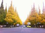 今見頃!!【神宮外苑いちょう並木】黄色に色づいたイチョウ並木でお散歩デートに急げっ♪