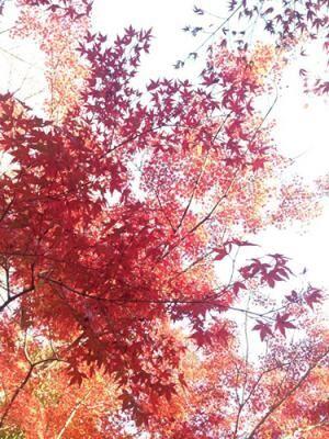 紅葉をLINEカメラでより鮮やかに加工! 見比べてみよう:前編