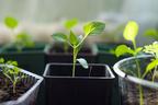 今年は家庭菜園に挑戦してみよう! 簡単な始め方とコツ