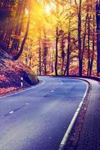 紅葉シーズン到来!ドライブでプラスα 気の利く便利アイテムまとめ