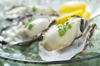 冬の味覚、牡蠣(カキ)! フェロモンとの繋がりと美味しい調理法