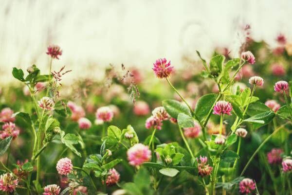 【恋の開運講座】春らしいアイテムで安定感アップ