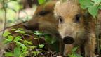 相葉雅紀、NHKスタッフによる国産自然ドキュメンタリー映画のナビゲーターに!