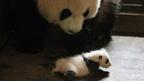 パンダの悩みに多くの母親が共感!『51(ウーイー)』親子試写会アンケート発表