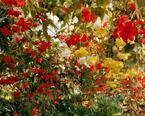 """原宿・表参道・青山がアートで盛り上がる「青参道アートフェア」、今年は""""写真""""にフォーカス"""
