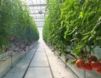 【ディズニー】パークに供給する野菜農園を山梨県に設立!