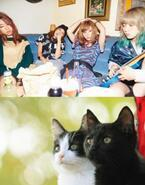 風間俊介主演『猫よん。』主題歌を「SCANDAL」が書き下ろし!