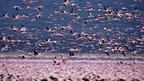 見上げてごらん、広い空vol.1 フラミンゴに見る、壮大なライフサイクルのドラマ