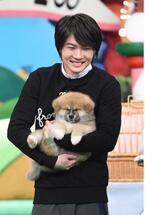 神木隆之介&土屋太鳳らが日本犬の赤ちゃんたちと共演「天才!志村どうぶつ園」