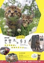 【予告編】猫ブームの原点!「岩合光昭の世界ネコ歩き」初の劇場版が今秋公開