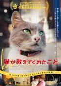 猫と人々の幸せな関係…ドキュメンタリー『猫が教えてくれたこと』公開決定