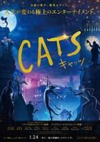 """『キャッツ』猫たちの""""一生に一度の特別な夜""""、歌い踊る本予告"""