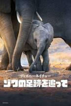 メーガン妃が思い込めて語る『ディズニーネイチャー/ゾウの足跡を追って』「人間と共通点が多い」