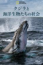 人間と変わらぬ家族愛も…海洋ドキュメンタリー「クジラと海洋生物の社会」日本版予告編