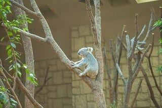 大阪府にある動物園をまとめてみた