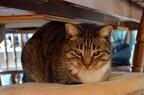 北海道にある猫カフェまとめ
