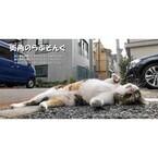 東京都豊島区の保護猫カフェで、猫写真展「街角のらぶそんぐ」開催