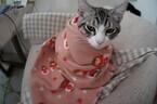 一眼レフ初心者が猫撮影に挑む! (4) 何のために猫の写真を撮るのか