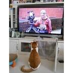 岩合光昭さんの番組「世界ネコ歩き」に、なぜ猫は夢中になるのか