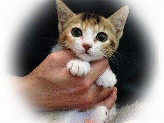 東京都豊島区で、可愛い猫たちの里親を募集中!-合計207匹
