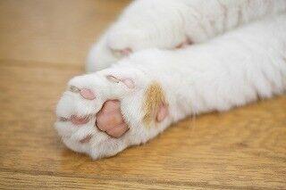 大阪府大阪市で、保護猫の里親会が開催-入場無料!