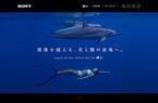 「α7S」でISO409600撮影した海中の幻想的な景色を公開 - ソニー