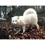 銀ギツネ、青ギツネ…珍しい狐がいっぱいのキツネ村がスゴイ!