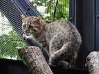 京都府・京都市動物園で「やまねこ博覧会」開催!