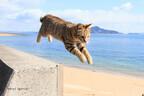 大阪府大阪市で猫専門の写真展「ねこ専」が開催