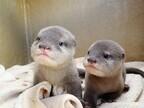 東京都・サンシャイン水族館のカワウソの赤ちゃんが可愛すぎる!
