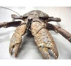 沖縄県・海洋博公園で絶滅危惧種「ヤシガニ」の生態を学ぶイベント開催!
