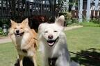 神奈川県・横浜にある屋上庭園で愛犬と思い切り遊んできた!