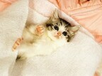 大阪府大阪市で猫の里親会が開催 - 入場無料!