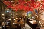 東京都渋谷区と港区に、BBQをしながら紅葉狩りができるテラスがオープン
