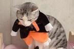 ハロウィンのコスプレをした猫