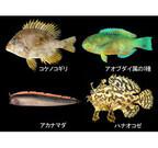 沖縄県・海洋博公園で、魚を間近に観察できる