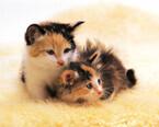 猫の命にかかわる恐ろしい病気。FIPってどんな病気?