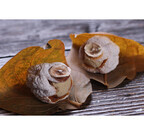 滋賀県大津市で和菓子の祭典「秋の菓子まつり」 - 和菓子作り体験も