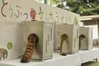 福岡県・福岡市動物園で、動物の選挙が開催! 投票するとしっぽが動く!