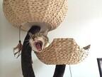東京都・高井戸にある「猫好きのための猫アパート」を取材!