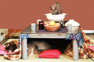 本物の猫と一緒にコタツにあたれるサービス「こたつネコ」開始!