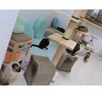 被災した保護猫の里親を探す猫カフェがオープン