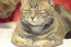 なぜ猫はお手手をたたんで座るのか
