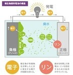 岐阜大、微生物燃料電池により畜産廃水から発電とリンの回収に成功