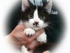 東京都豊島区で、227匹の猫の里親を募集中