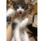 東京都・大塚の猫保護団体が、飼育・譲渡できない子猫を受け入れ中