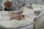 和歌山県・アドベンチャーワールドで、パンダの双子の赤ちゃんが誕生!