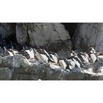 東京都・葛西臨海水族園で、イワトビペンギンの展示がついに再開!!